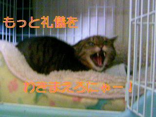 ♪ (1).JPG